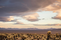Landscape view with cacti in Joshua Tree National Park at dusk, California, USA 11015318725| 写真素材・ストックフォト・画像・イラスト素材|アマナイメージズ