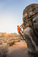 Male boulderer moving up boulder in Joshua Tree National Park at dusk, California, USA 11015318733| 写真素材・ストックフォト・画像・イラスト素材|アマナイメージズ