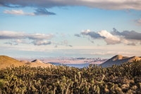 Landscape with cacti in Death Valley National Park, California, USA 11015325413| 写真素材・ストックフォト・画像・イラスト素材|アマナイメージズ