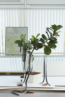 Potted plant with rubber straps hanging on it, map in background 11016027053| 写真素材・ストックフォト・画像・イラスト素材|アマナイメージズ