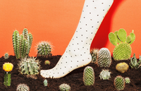 Low section of woman wearing stockings while standing amidst cactus plants 11016033288| 写真素材・ストックフォト・画像・イラスト素材|アマナイメージズ