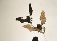 Bat fossil with shadow against white background 11016034581| 写真素材・ストックフォト・画像・イラスト素材|アマナイメージズ