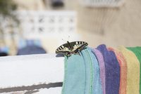 Close-up of butterfly on towel during sunny day 11016035825| 写真素材・ストックフォト・画像・イラスト素材|アマナイメージズ