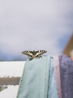 Close-up of butterfly on towel during sunny day against sky 11016035855| 写真素材・ストックフォト・画像・イラスト素材|アマナイメージズ