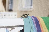 Close-up of butterfly on towel during sunny day 11016035869| 写真素材・ストックフォト・画像・イラスト素材|アマナイメージズ