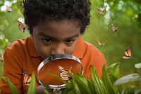 African boy looking at butterflies with magnifying glass 11018077655| 写真素材・ストックフォト・画像・イラスト素材|アマナイメージズ