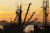 Rigging of Fishing Boats Silhouetted against Sky at Sunset, Prince Rupert, British Columbia, Canada 11030038393| 写真素材・ストックフォト・画像・イラスト素材|アマナイメージズ
