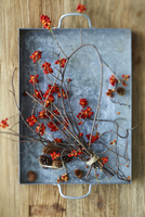 Overhead View of American Bittersweet Vine Dried with Pinecones on Metal Tray as Fall Decor 11030040739| 写真素材・ストックフォト・画像・イラスト素材|アマナイメージズ