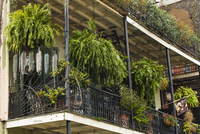 Cast-iron Balconies with Plants on Old Building, French Quarter, New Orleans, Louisiana, USA 11030046653| 写真素材・ストックフォト・画像・イラスト素材|アマナイメージズ