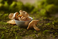 Close-up of Small Metal Bowl of Whole Chanterelle Mushrooms on Dirt and Moss 11030048605| 写真素材・ストックフォト・画像・イラスト素材|アマナイメージズ