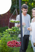 Fruits and mint in hanging baskets in garden, couple in background 11077008853| 写真素材・ストックフォト・画像・イラスト素材|アマナイメージズ