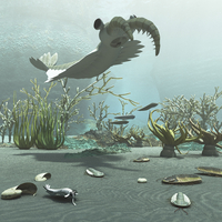 Animals and floral life from the Burgess Shale formation of the Cambrian period. 11079027858| 写真素材・ストックフォト・画像・イラスト素材|アマナイメージズ