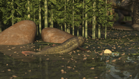 A Ceratodus lungfish from the early Cretaceous. 11079027866| 写真素材・ストックフォト・画像・イラスト素材|アマナイメージズ