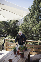 High angle view of senior man watering potted plants at table against trees 11081012467| 写真素材・ストックフォト・画像・イラスト素材|アマナイメージズ