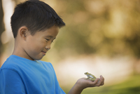 A boy holding a frog in the palm of his hand.  11093008630| 写真素材・ストックフォト・画像・イラスト素材|アマナイメージズ