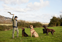Dog walker, a man with his arm raised to throw a stick for three dogs. 11093014347| 写真素材・ストックフォト・画像・イラスト素材|アマナイメージズ