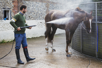 A man hosing down a thoroughbred horse after exercise in a stable yard. 11093014940| 写真素材・ストックフォト・画像・イラスト素材|アマナイメージズ