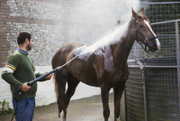 A man hosing down a thoroughbred horse after exercise in a stable yard. 11093014941| 写真素材・ストックフォト・画像・イラスト素材|アマナイメージズ
