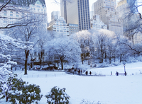 Snow covered lawn and trees in Central Park, Manhattan, New York, USA, skyscrapers in the background. 11093015222| 写真素材・ストックフォト・画像・イラスト素材|アマナイメージズ