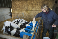 Woman standing in a stable, pouring milk into a feeder for five black and white calves. 11093015661| 写真素材・ストックフォト・画像・イラスト素材|アマナイメージズ