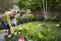 Woman standing in a garden, looking at flowers in a flowerbed. 11093016018| 写真素材・ストックフォト・画像・イラスト素材|アマナイメージズ