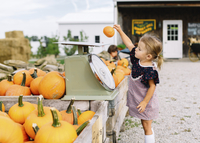 Young girl standing at a table with pumpkins at a farm stall, placing small pumpkin on weighing scales. 11093017954| 写真素材・ストックフォト・画像・イラスト素材|アマナイメージズ