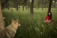 Red Riding Hood meeting the wolf in the forest 11094007611| 写真素材・ストックフォト・画像・イラスト素材|アマナイメージズ