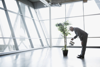 Businessman watering potted tree in modern office 11096010159| 写真素材・ストックフォト・画像・イラスト素材|アマナイメージズ