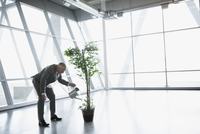 Businessman watering potted tree in modern office 11096010160| 写真素材・ストックフォト・画像・イラスト素材|アマナイメージズ