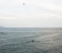 Distant view of man surfboarding in sea against sky 11100059850| 写真素材・ストックフォト・画像・イラスト素材|アマナイメージズ