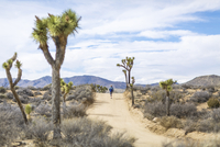 Rear view of male hiker running on road at Joshua Tree National Park during sunny day 11100062159| 写真素材・ストックフォト・画像・イラスト素材|アマナイメージズ