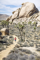 High angle view of hiker running at Joshua Tree National Park during sunny day 11100062188| 写真素材・ストックフォト・画像・イラスト素材|アマナイメージズ