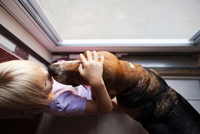 Overhead view of girl petting beagle while standing by window 11100064690| 写真素材・ストックフォト・画像・イラスト素材|アマナイメージズ