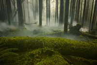 Tranquil view of fog in forest at Cascade National Park 11100064986| 写真素材・ストックフォト・画像・イラスト素材|アマナイメージズ