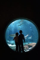 Siblings looking at fish while standing in aquarium 11100066770| 写真素材・ストックフォト・画像・イラスト素材|アマナイメージズ