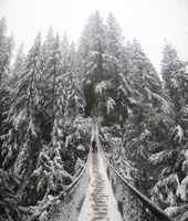 Hiker with dog walking on footbridge against snow covered trees at Lynn Canyon Park 11100068031| 写真素材・ストックフォト・画像・イラスト素材|アマナイメージズ