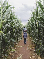 Rear view of father and son walking amidst corn field 11100069573| 写真素材・ストックフォト・画像・イラスト素材|アマナイメージズ