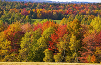 Autumn colours, trees and hayfield, Eastern Townships 11102001902| 写真素材・ストックフォト・画像・イラスト素材|アマナイメージズ